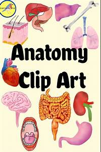 Anatomy Clip Art Organs And Structures