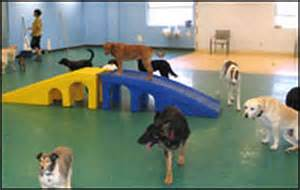 Dog Day Care Play Equipment