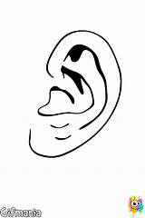 Ear Coloring Human Ears Pages Getcoloringpages sketch template