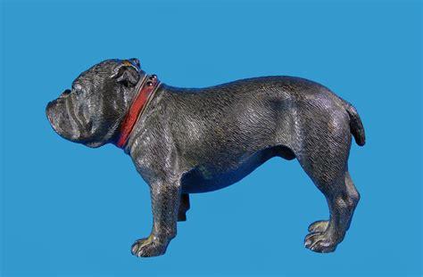 french bulldog boston terrier sehr seltene grosse wiener