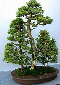 die 25 besten bonsai wald ideen auf pinterest bonsai With whirlpool garten mit bonsai empire