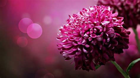 HD Wallpaper Flower Download | PixelsTalk.Net