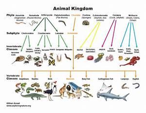 Animal Kingdom Classification Chart
