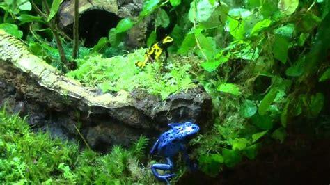 poison dart frog vivarium youtube