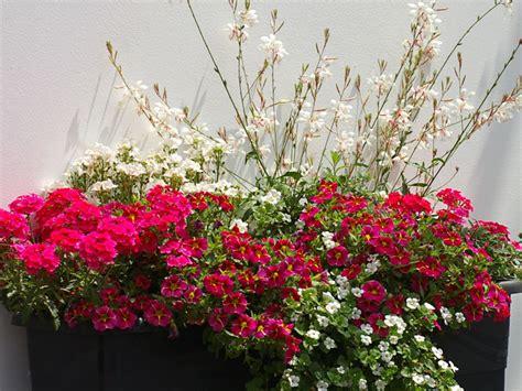 Balkon Pflanzen Ideen by Romantische Blumen Am Balkon