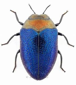 Orange and blue bug. Makes me think of the Oilers. Don't ...