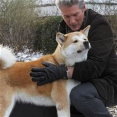 hachi  dogs tale