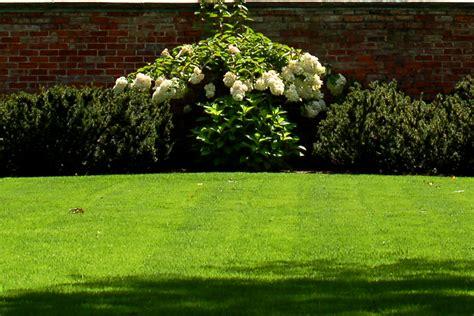 rid  grass  reduce lawn size