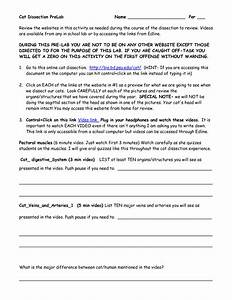 11 Best Images Of Frog Dissection Worksheet