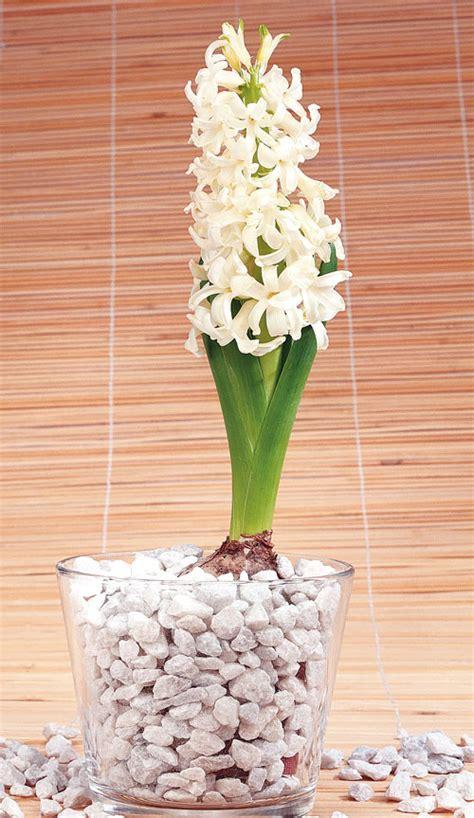 plant flowering bulbs australian handyman magazine