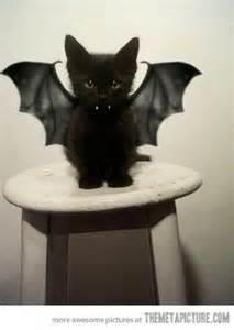 bat cat costume cat bat black