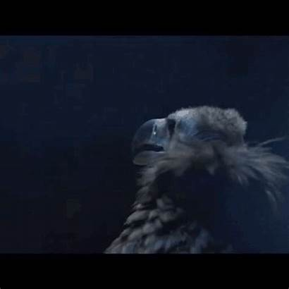 Vulture Clifford Levitate