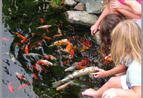 What Are The Most Popular Types Of Backyard Pond Fish
