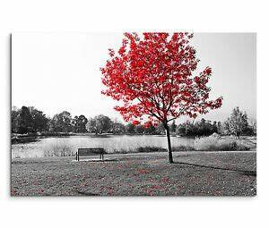 Schwarz Weiß Bilder Mit Rot : leinwandbild 120x80cm auf keilrahmen baum schwarz wei rot ~ A.2002-acura-tl-radio.info Haus und Dekorationen