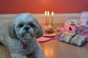 Happy Birthday Cute Dog