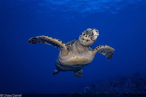 sealife unveils dc underwater camera  dema