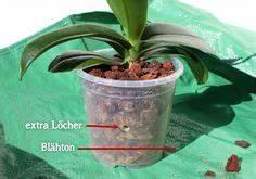 Verholzten Lavendel Schneiden : clematis richtig schneiden einige clematis sorten wie ~ Lizthompson.info Haus und Dekorationen