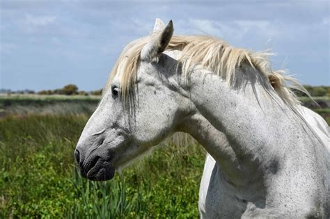 horse stallion animal nature equine cavalry grass field horses animals agriculture jump tree outdoor kb