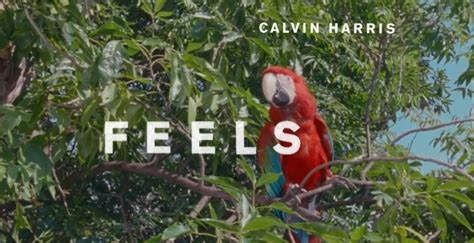 Feels, Calvin Harris Featuring Pharrell Williams, Katy
