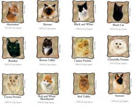 different types of cats cat breeds images cats types