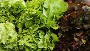 Gemüse Im Winter : kopfsalat pflanzen gem se aus dem eigenen garten ~ Pilothousefishingboats.com Haus und Dekorationen