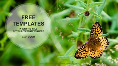 butterfly  flower nature powerpoint templates