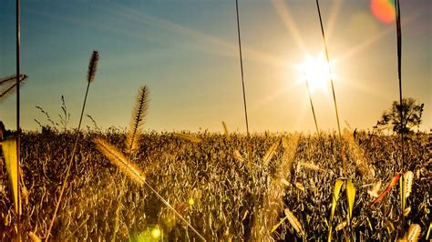 Plentiful Harvest | Forefront Experience: Making Disciples ...