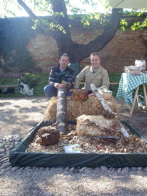 Shiitake Pilze Im Garten by Pilze Z 252 Chten Rarit 228 Tenb 246 Rse Botanischer Garten Wien