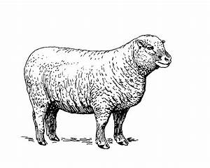 Black And White Sheep Clipart – 101 Clip Art