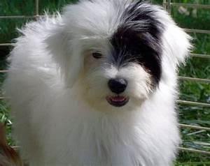 Chinese Cresant Powder Puff Puppy | Ottawa Dog of the Week ...