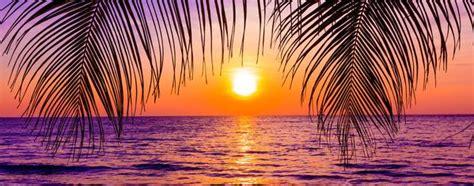 sunset palm lightheaded beds