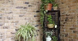 Pflegeleichte Zimmerpflanzen Mit Blüten : zimmerpflanzen f r dunkle ecken mein sch ner garten ~ Eleganceandgraceweddings.com Haus und Dekorationen