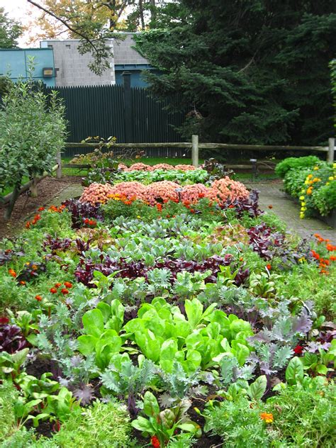 picture of a vegetable garden winter gardening tips for march and april in new zealand