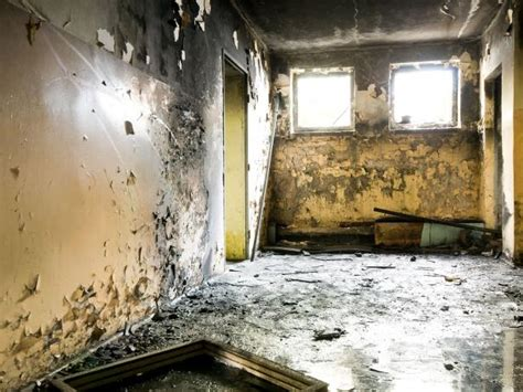 black mold symptoms  health effects hgtv