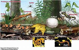 "Difference between ""Detritivores"" and ""Decomposers ..."