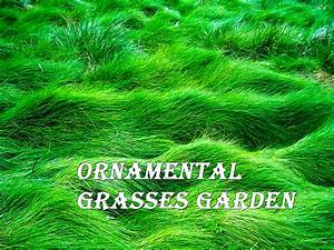 Ornamental Grass Garden Designs - Home Decorators Collection