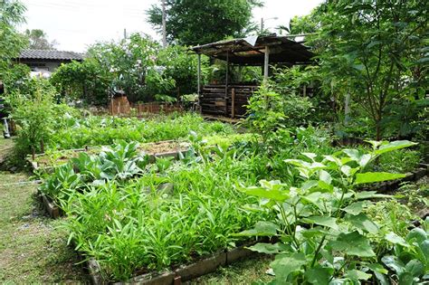 ข้อดีของการปลูกผักบริโภคเอง การปลูกพืชผักไว้บริโภคเอง ถือ ...