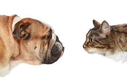 Dog Vs Cat Which Pet Is Better? Cammy