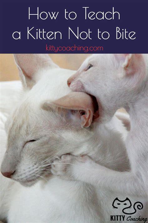 teach  kitten   bite