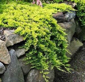 Arbuste Feuillage Persistant Croissance Rapide : plantes couvre sol croissance rapide dans le jardin moderne ~ Premium-room.com Idées de Décoration