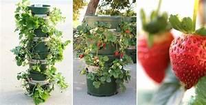 Plant De Fraise : comment faire une tour de fraises r servoir plant de ~ Premium-room.com Idées de Décoration