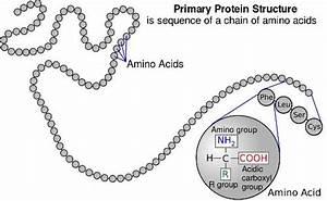 Biology For Kids  Proteins And Amino Acids