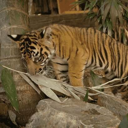 Animals Giphy Zoo San Gifs Diego