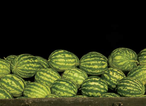 wild  georgia watermelon farm flavor