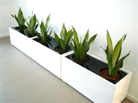 Large Indoor Planters by Large Indoor Plant Pots Melbourne Beautiful Blooms