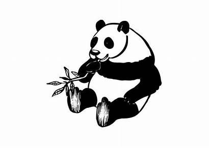 Panda Colorear Coloriage Dibujo Coloring Colorare Malvorlage