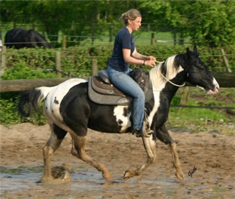 mount paint horse hengst schecke