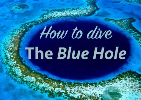 How To Dive by How To Dive The Great Blue Roamaroo Travel