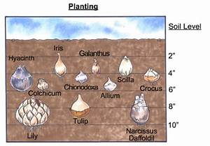And Dry Bulb Chart Planting Bulbs Howstuffworks