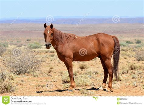 wild horse african landscape horses namibia canyon fish river near preview dreamstime